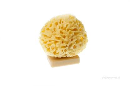 Obrázok pre výrobcu Morská huba Honeycombe - stredná bielená