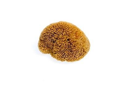 Obrázok pre výrobcu Morská huba tráva stredná -  nebielená