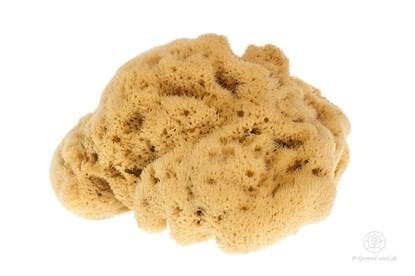 Obrázok pre výrobcu Morská huba hodvábna - veľká nebielená